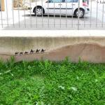 street_art_french_oakoak_21