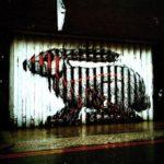street_art_roa_1