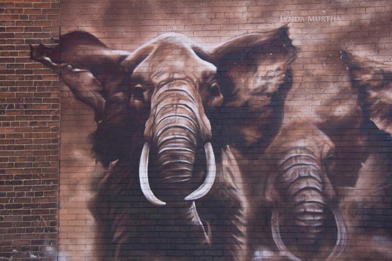 elephant_street_art_canada_1
