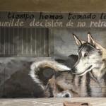 street art wolf