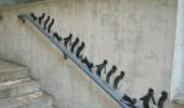 Street Art Penguins
