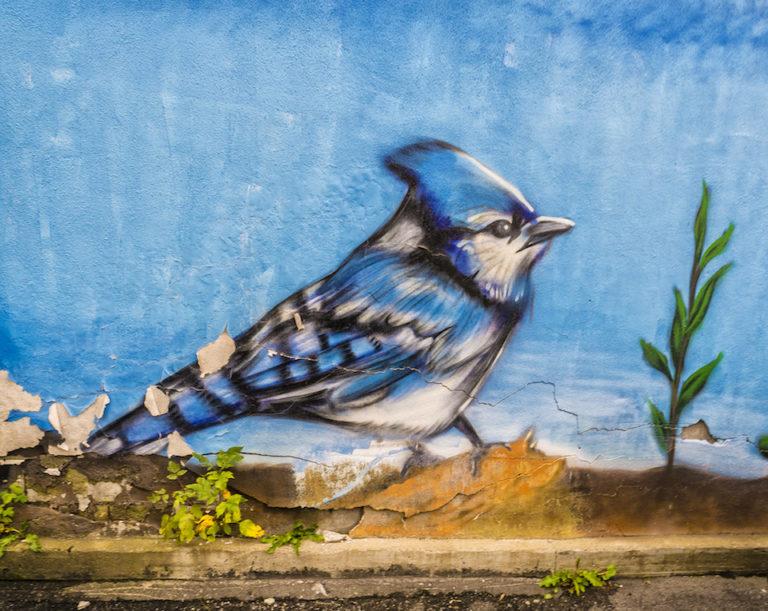Blue Jay – Street Art in Ottawa, Canada