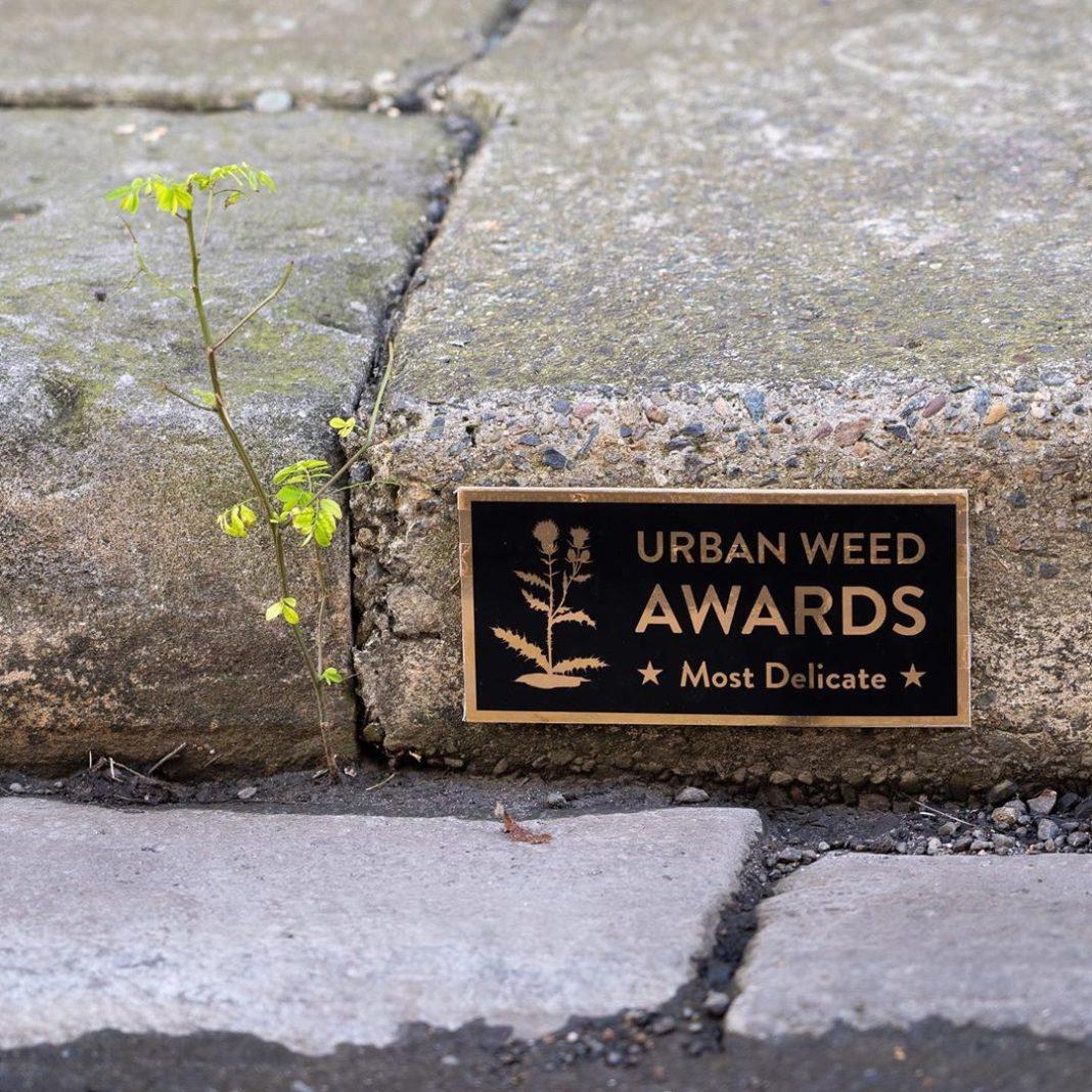 #StreetArt by Michael Pederson in #Sydney #Australia
